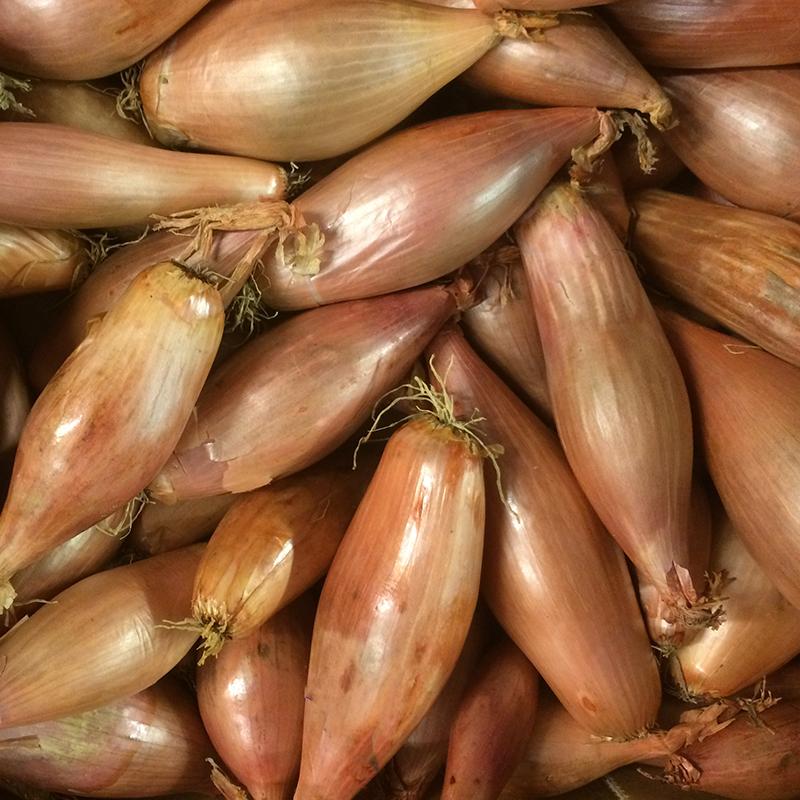 fresh vegetables speyfruit online ordering torpedo shallots