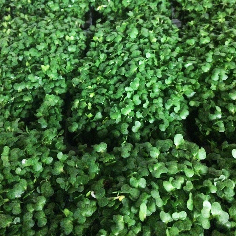 fresh vegetables speyfruit online ordering cress