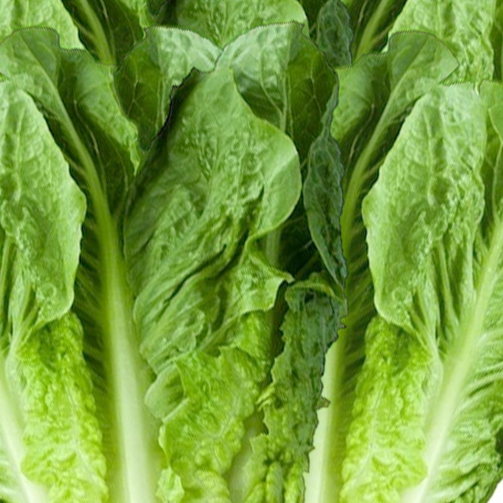 fresh vegetables speyfruit online ordering flat lettuce