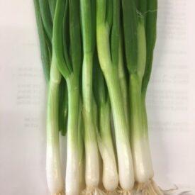 Spring Onion - Radish - Beetroot