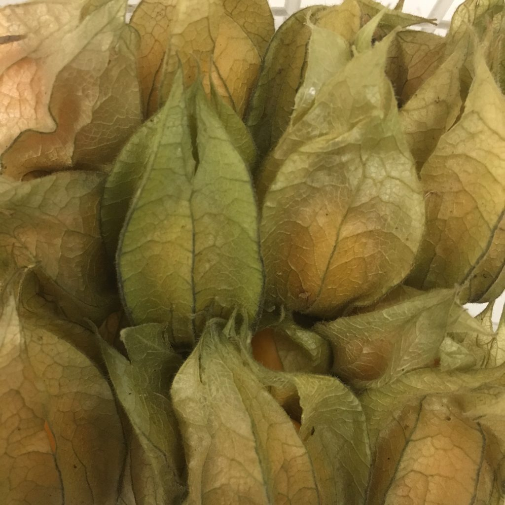 fresh fruit speyfruit online ordering physalis