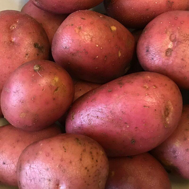 fresh vegetables speyfruit online ordering roosters bakers